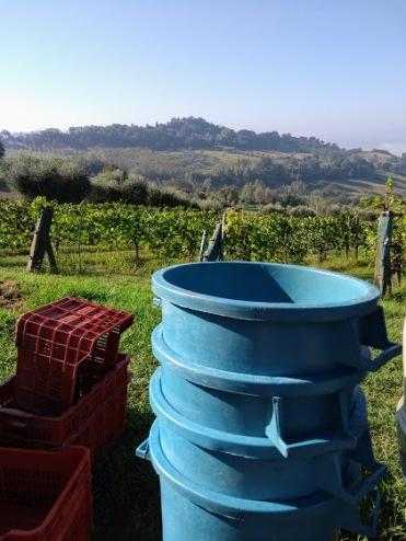 grape bins
